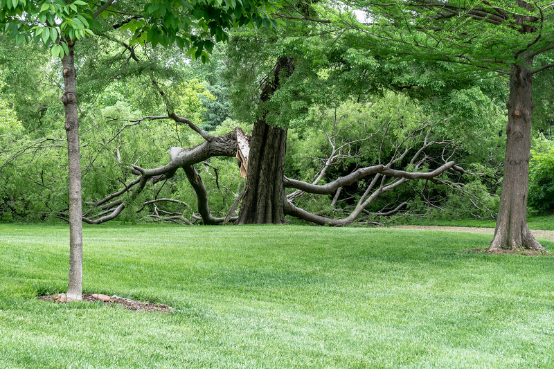 Hackberry Removal May 2018-03598