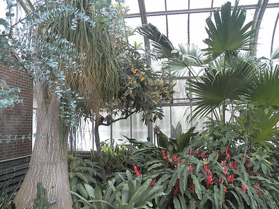 inside the Conservatory at Brookside Gardens