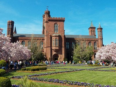 the Smithsonian Castle with flowering magnolia trees