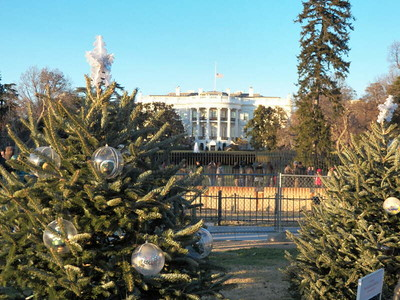 State Christmas trees and the White House
