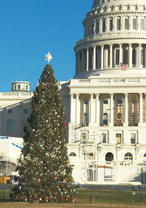 The Capitol building and the Capitol Christmas tree