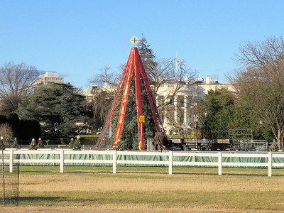 """zoomed in view of the """"closed"""" National Christmas tree with the White House in the background"""