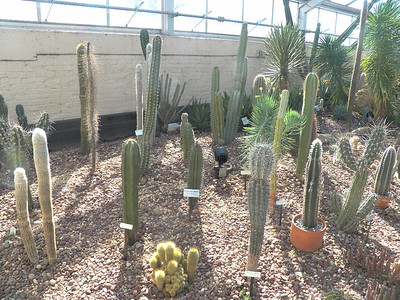 cacti in the Desert House