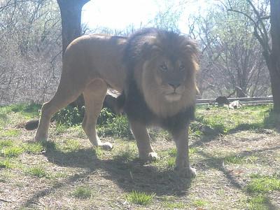 Maryland Zoo, April 2016