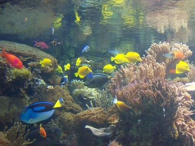 National Aquarium - December 2011