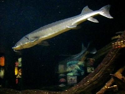 National Aquarium - December 2012