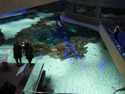the Blacktip Reef Exhibit, seen from above