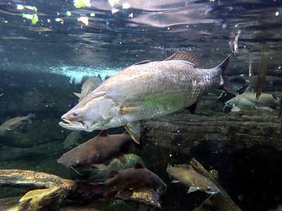 fish in Australian exhibit