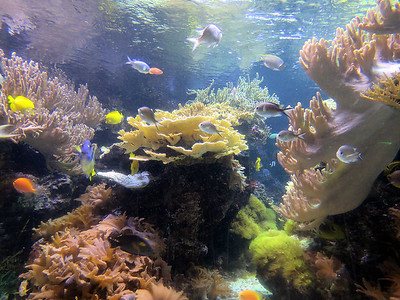 Pacific reef fish