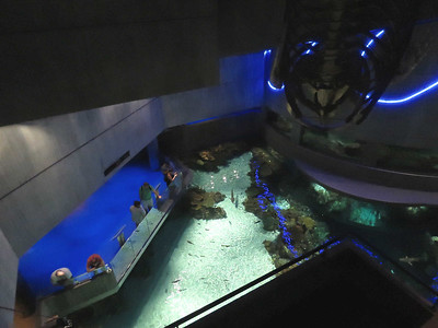 looking down on the Blacktip Reef exhibit from an upper level