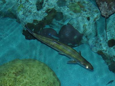 National Aquarium - October 2017