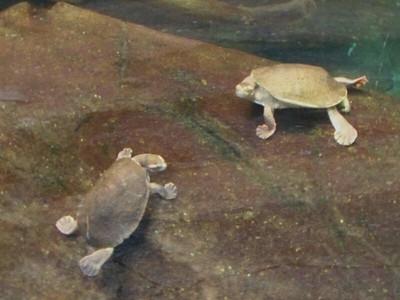 Jordine River Turtles