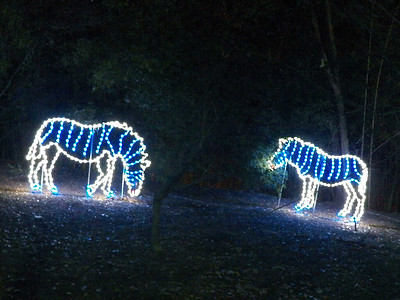 zebra lights