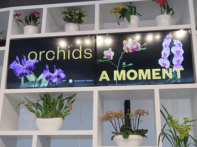 Orchids at the Hirshhorn