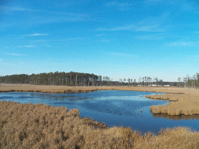Blackwater National Wildlife Refuge, 12/31/2014