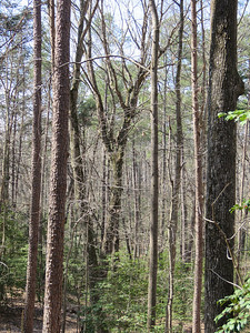 trees along a trail