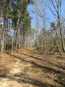 looking up the hill on the orange trail
