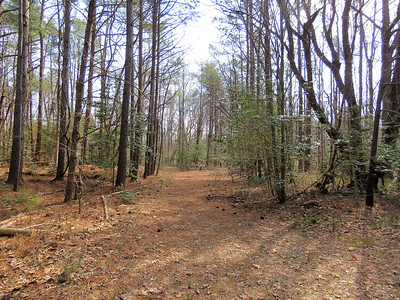 going through the woods on the orange trail