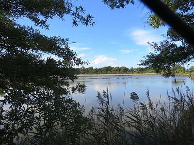 pond, October 7, 2017