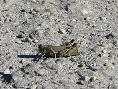 grasshopper, October 7, 2017
