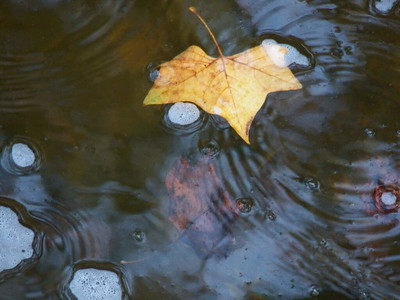 a leave floating down the creek, October 2012