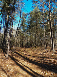 the trail at the Brown Property, January 2013