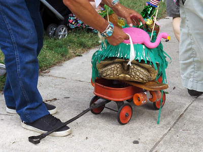 you weren't expecting Brutus the tortoise to actually walk in the parade, were you?