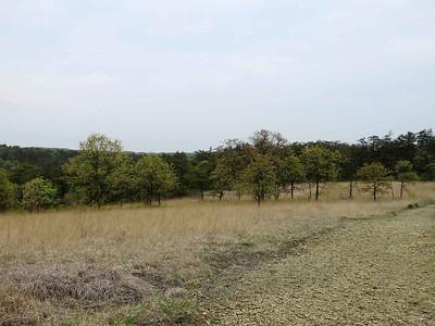 oak trees along the Serpentine Trail