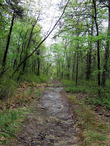 near the start of the Choate Mine Trail -  notice how wet the trail is