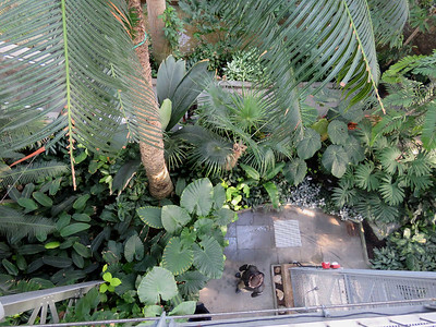 a view looking down from the Canopy Walk in the Tropics at the center of the conservatory