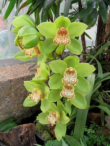 an orchid