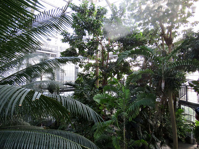 a view from the Canopy Walk in the Tropics at the center of the conservatory