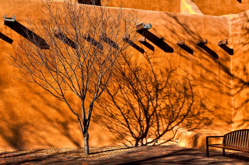 SantaFe-Tree-Shadow-1