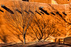 SantaFe-Tree-Shadow-1