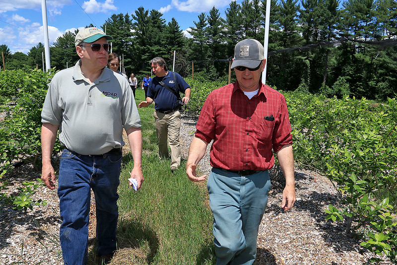 Massachusetts Department of Agricultural Resources (MDAR) Commissioner John Lebeaux visited Parlee Farms to recognize the contributions that Parlee Farms has made to the state's strawberry industry. Lebeaux, on left, listens to Mark Parlee talk about their blueberries as they walk through the the blueberry patch during his visit. SUN/JOHN LOVE