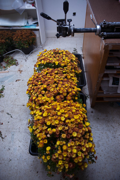 MUMS FOR SHOOTING
