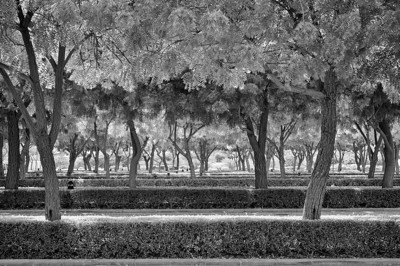 Trees outside the Sultan Qaboos Grand Mosque, Muscat