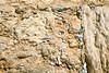 IL 3145  The Kotel (Western Wall)  Jewish Quarter, Old City, Jerusalem, Israel