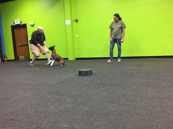 Obedience Intensive