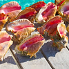 Caribbean seashells on a wooden pier Mexico