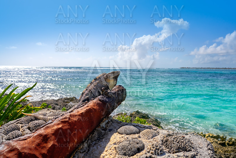 Akumal beach rusted canon in Riviera Maya