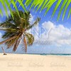 Coconut palm trees tropical typical background