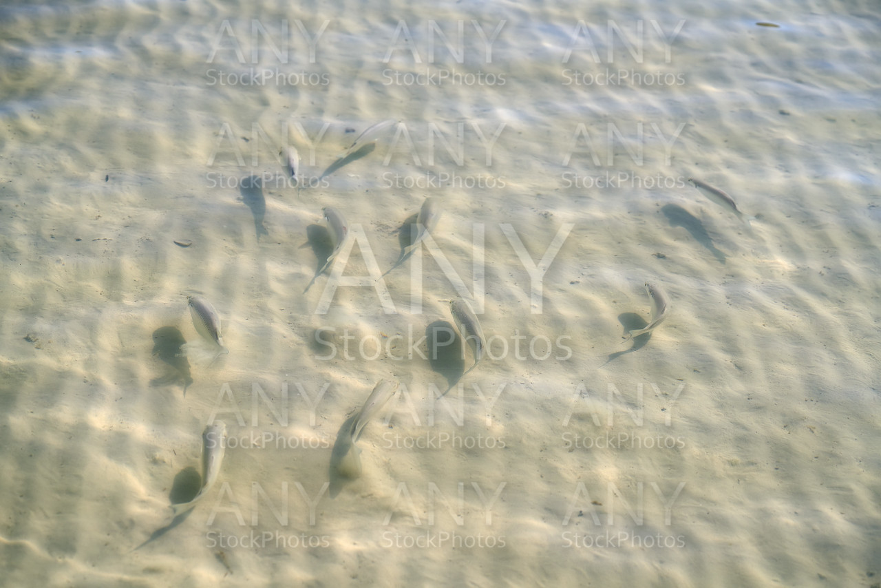 Caribbean transparent water beach fish school