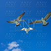 Seagulls sea gulls flying on blue sky