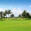 golf course tropical palm trees  Mexico