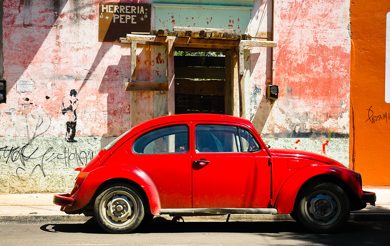 Red Punch Buggy Beetle<br /> Oaxaca