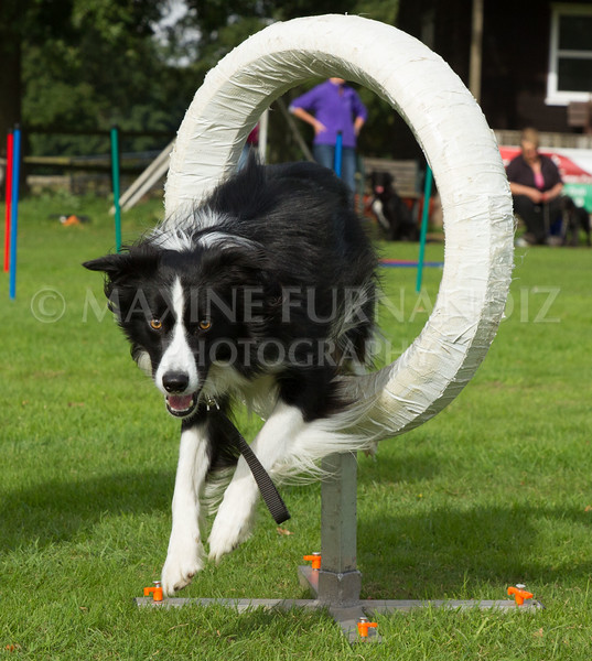 Dogs Sept 2016-5055