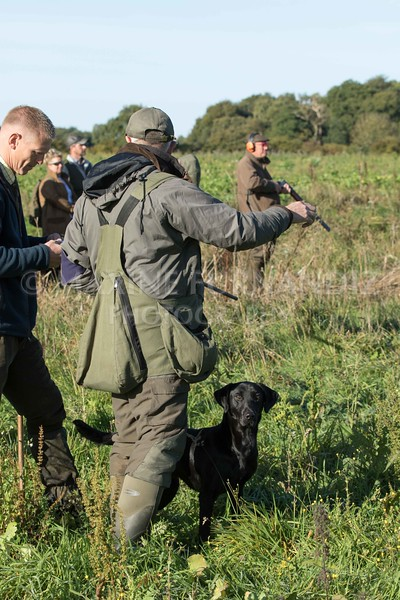 Yorkshire Gundog NoviceFT 6 Oct 2017-0380