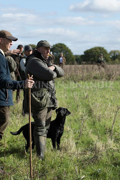 Yorkshire Gundog NoviceFT 6 Oct 2017-0575