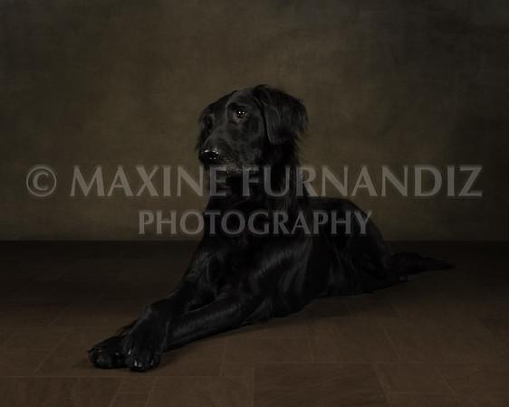 Dogs-7335-Edit